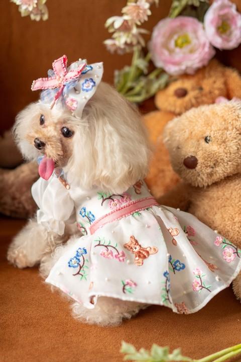 Teddy et l'été